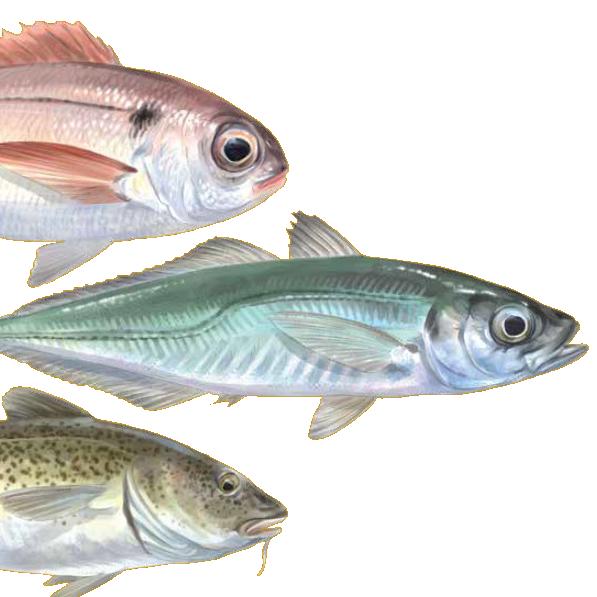 jeder Fisch hat seine Geschichte